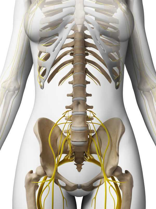 Nerve Entrapments and Pelvic Pain