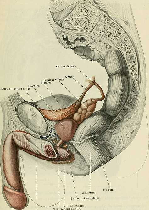 Oncology And The Male Pelvic Floor