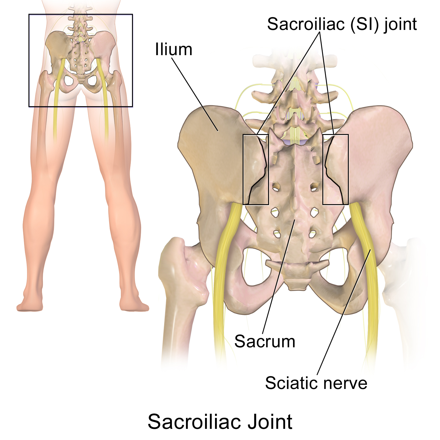 Sacroiliac_Joint.png