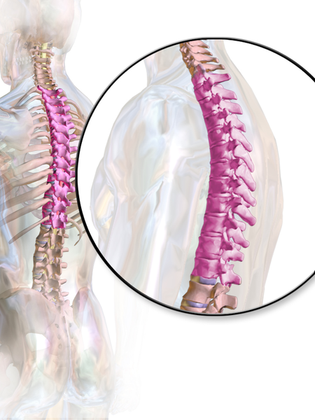 Discovering the Thoracic Spine